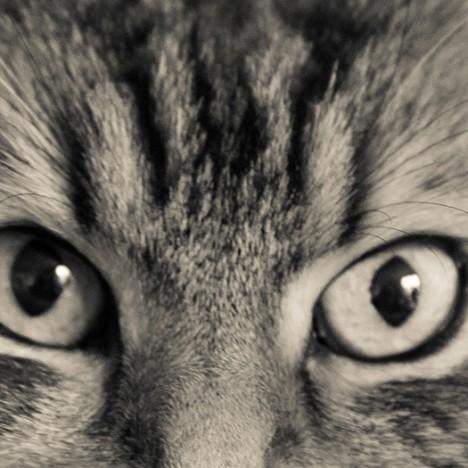 Ces Roudoudous et bêtes à poils ! Le chat